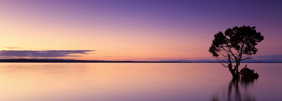 single tree in a lake with a purple and peach sunset