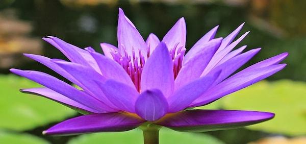 Closeup of purple flower